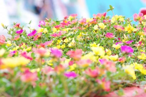 [一般葬]育てた花々に囲まれて